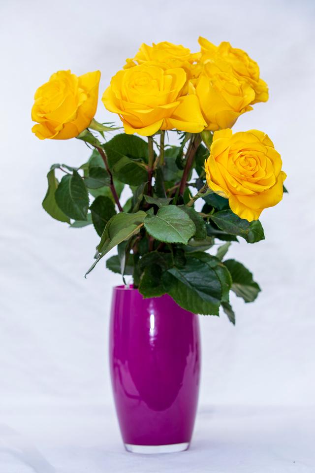 105/365 I got roses!