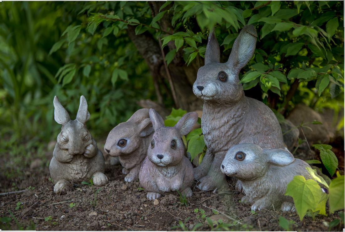 143/365 Happy Wabbit Wednesday from Gloversville Bunny Farm