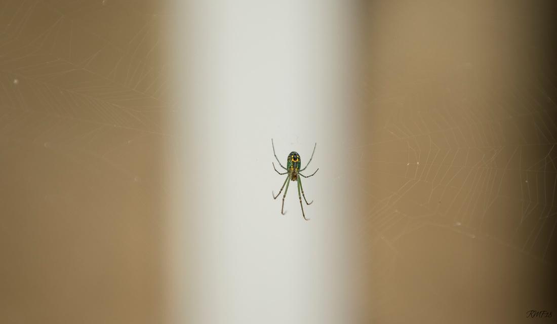 173/365 Gaurd spider