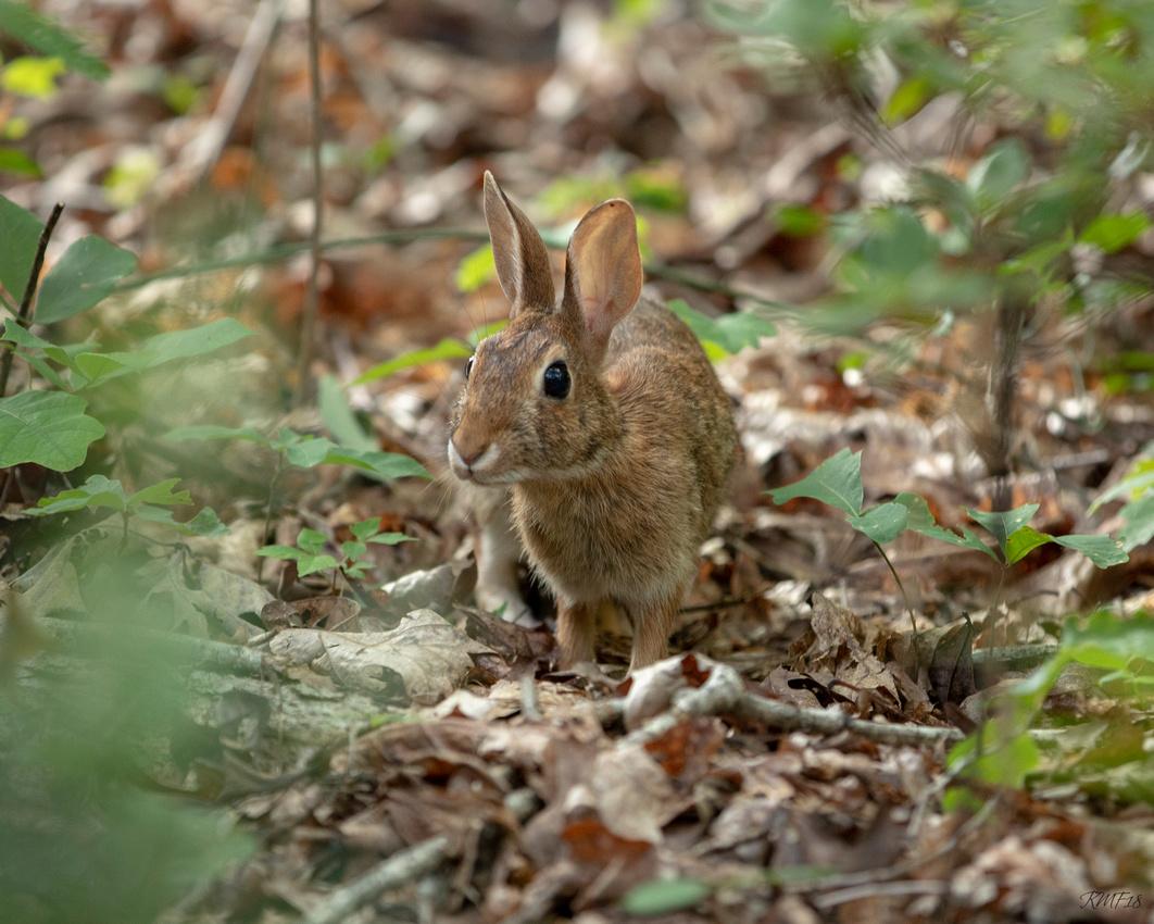 192/365 Good morning bunny