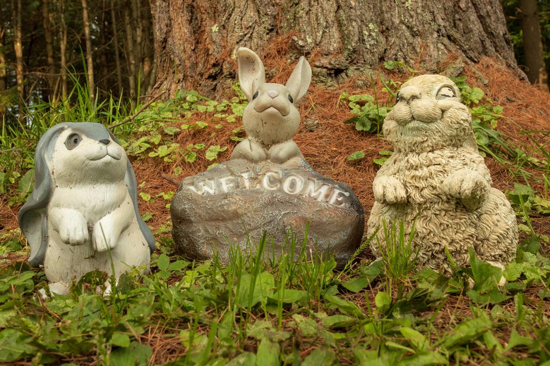 234/365 Happy Wabbit Wednesday in the pines