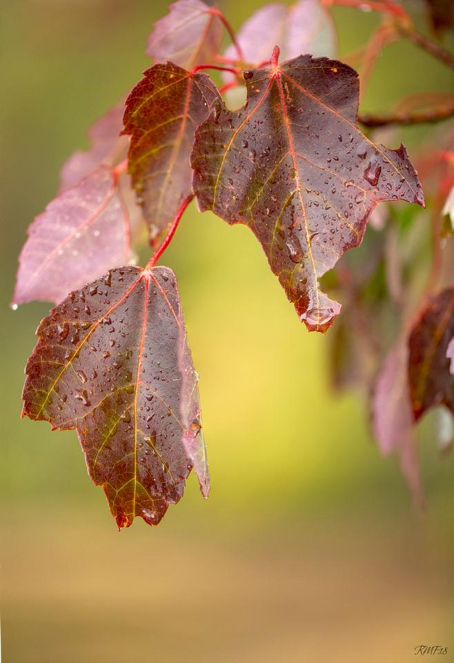 276/365 Rainy fall morning