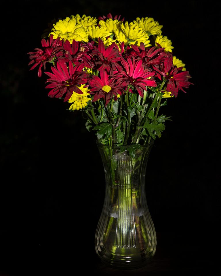 288/365 Light painting flowers