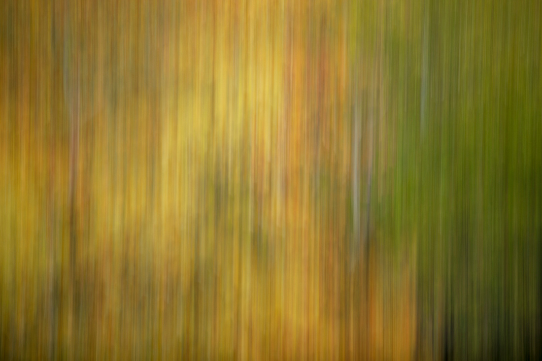 301/365 Forest in motion