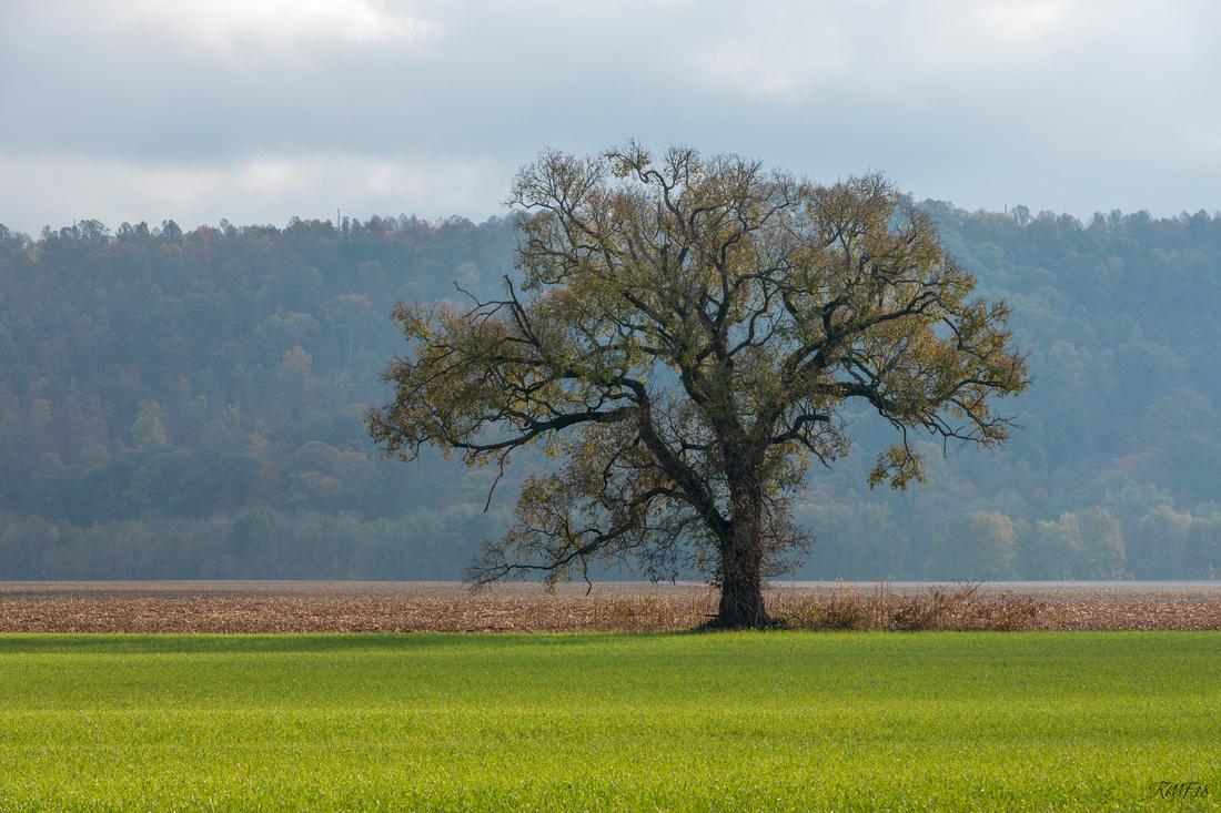 302/365 Field tree