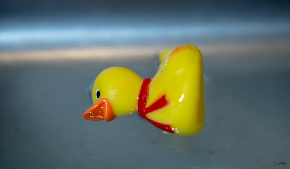322/365 Best Western Duck failure