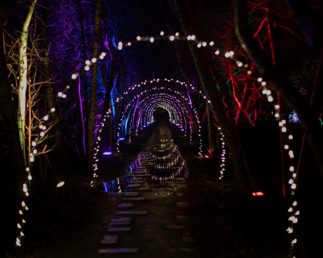 336/365 Chrsitmas Lights