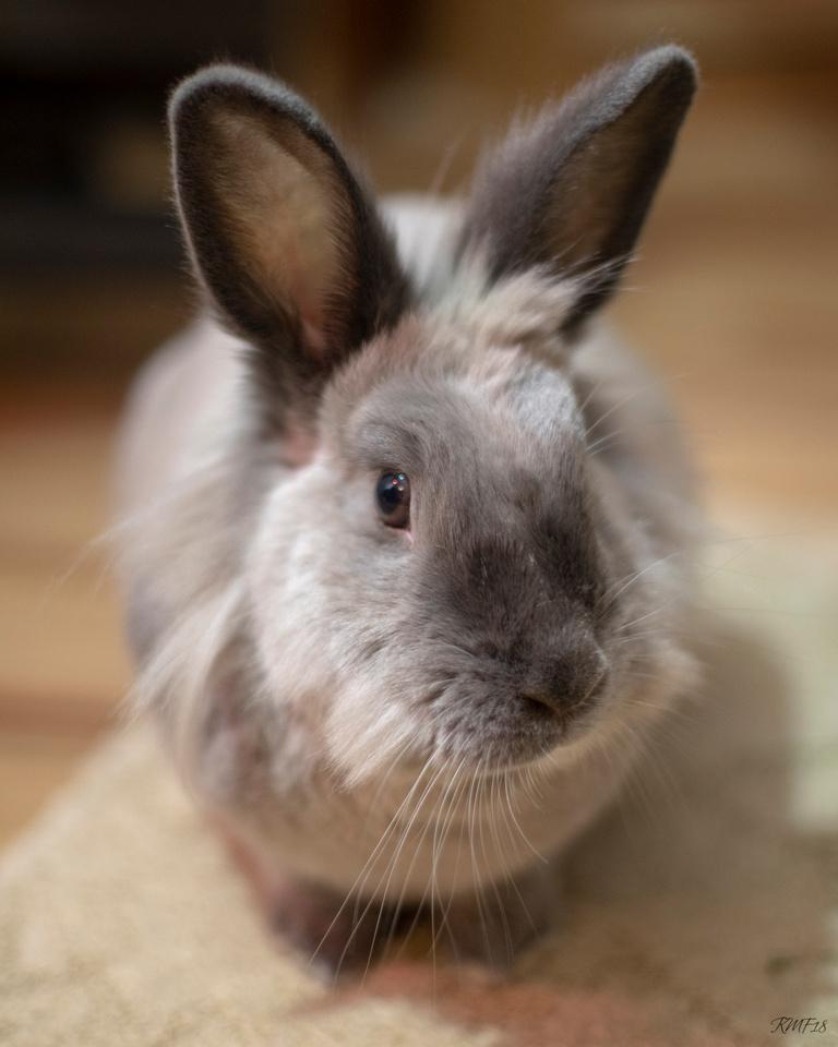 339/365 Cute bunny