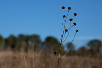 Winter, gone to seed