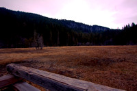 Longmire Meadow HDR