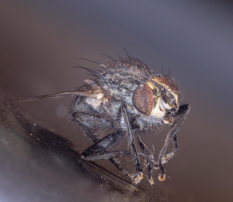 029/365 Dirty dead fly