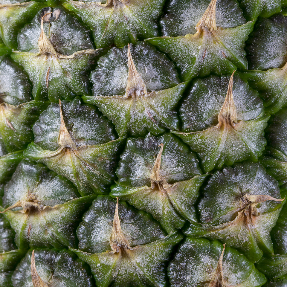 134/365 Pineapple closeup