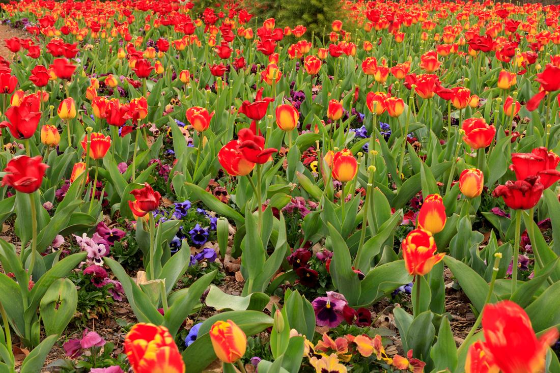 088/365 Field of flowers