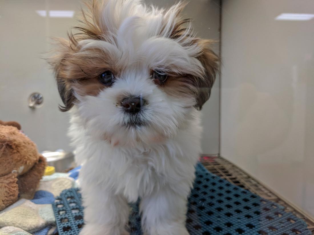 072/365 Pet store visit