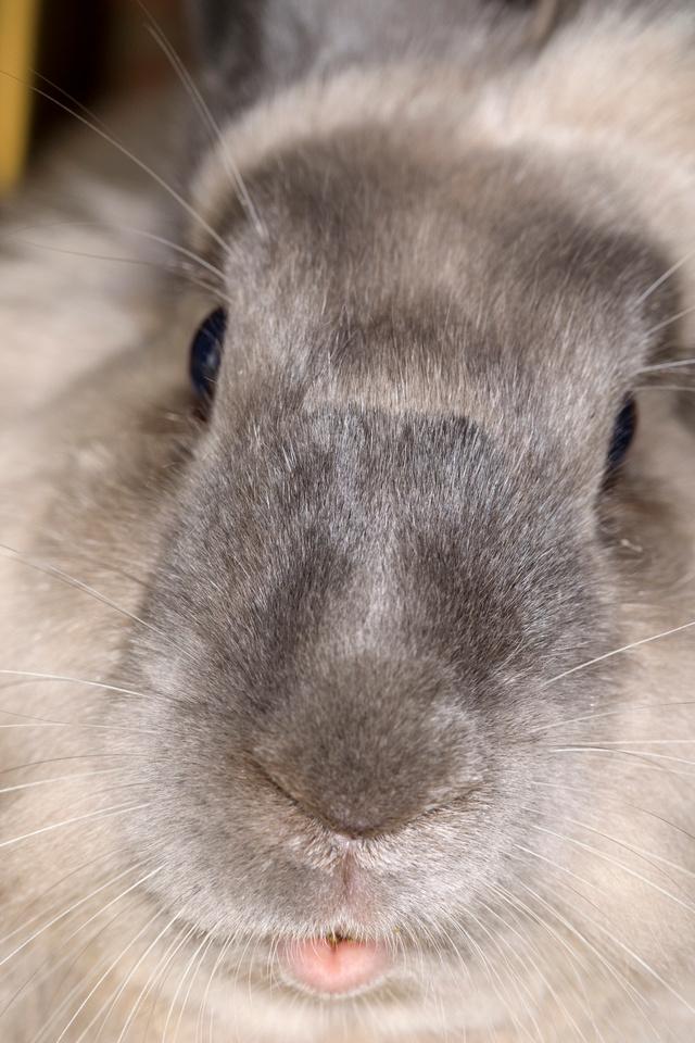 080/365 Bunny face