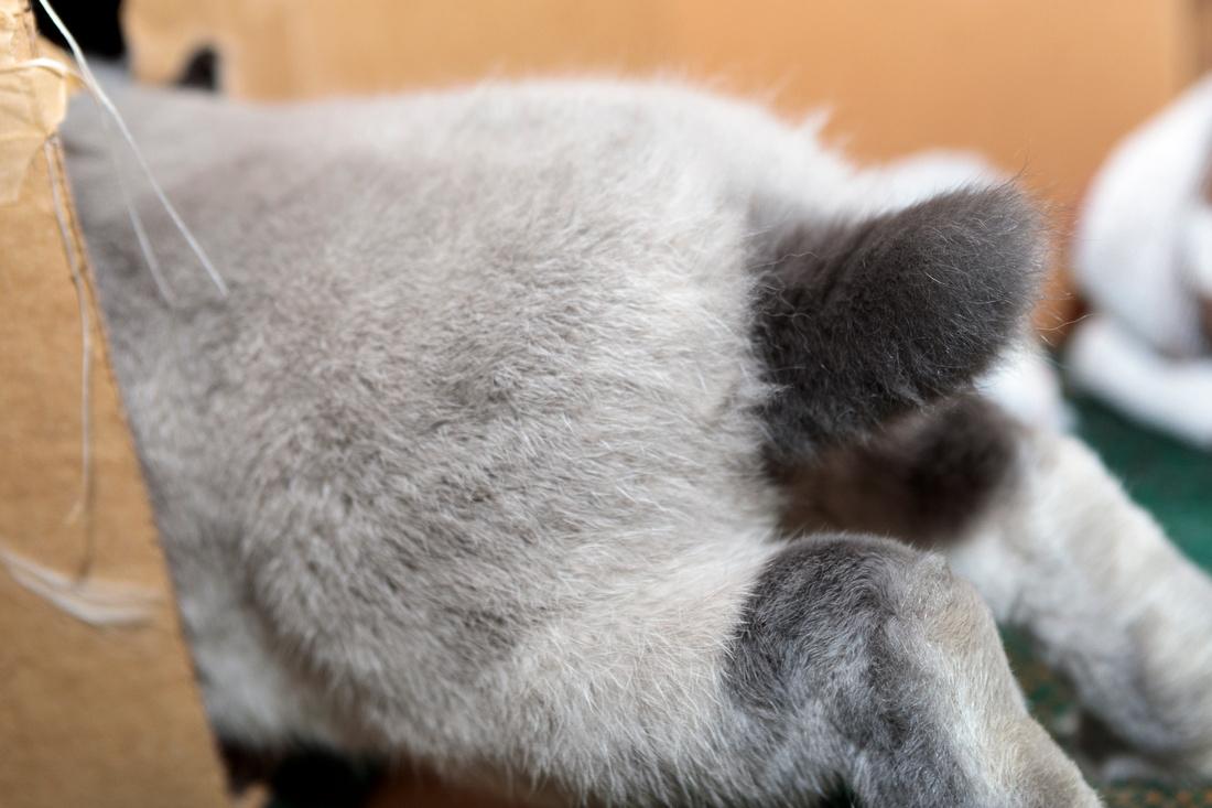 045/365 Bunny tail